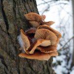 panasonic-cm1-fungi-original