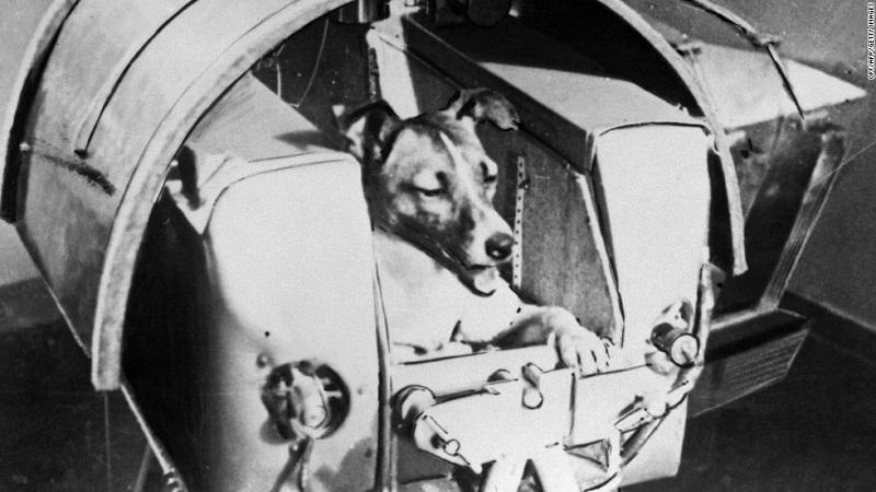 آموزش سگ های فضانورد
