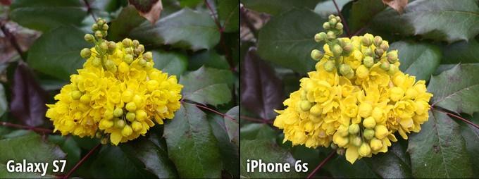 مرحله 4 مقایسه دوربین گلکسی اس 7 و آیفون 6 اس