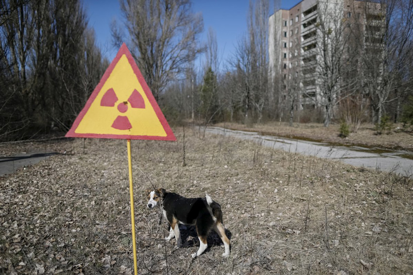 reports-have-been-made-that-although-no-human-life-is-in-chernobyl-scours-of-animal-life-has-since-thrived-near-the-disaster-site