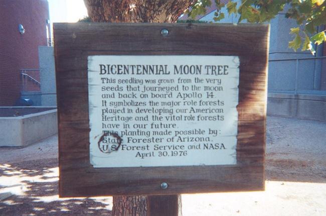درختانی از ماه