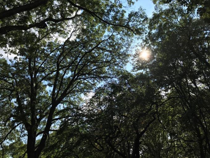به خورشید نگاه کن آیفون 7