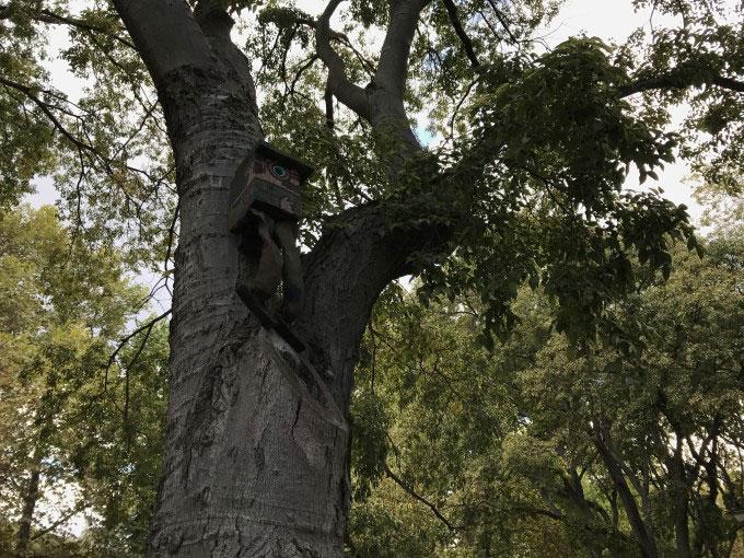 خانه پرنده در بالای درخت آیفون 7