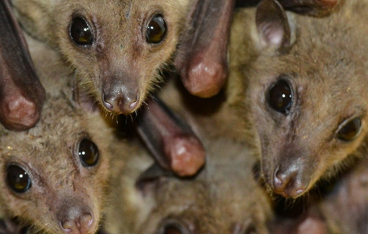 درک صدای خفاش ها با یادگیری ماشینی