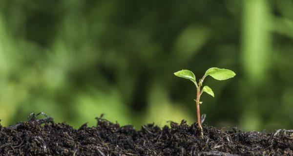 دیجی قلم؛ تکنولوژی و تاثیر آن بر روی محیط زیست، نابودی یا نجات؟
