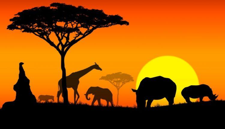 دیجی فکت؛ 10 حقیقت جالب در مورد قاره آفریقا