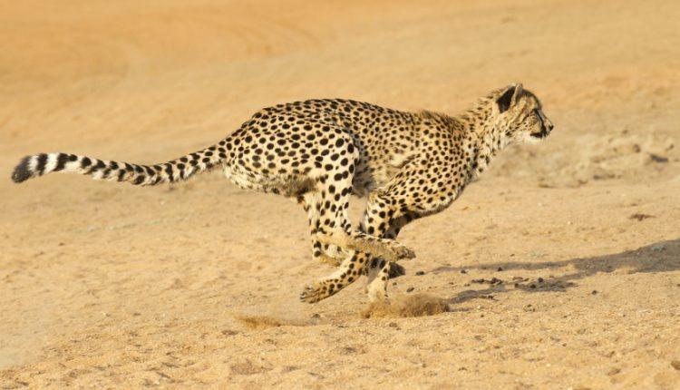 تاپ 10: با سریعترین حیوانات روی زمین آشنا شوید