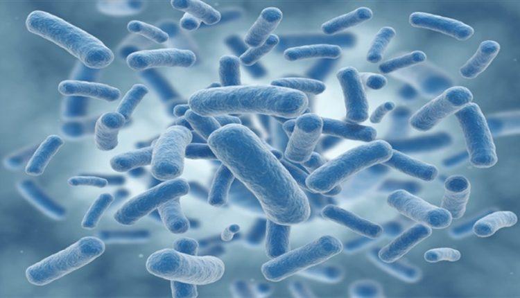دیجی فکت:22 دانستنی دربارهی باکتریها