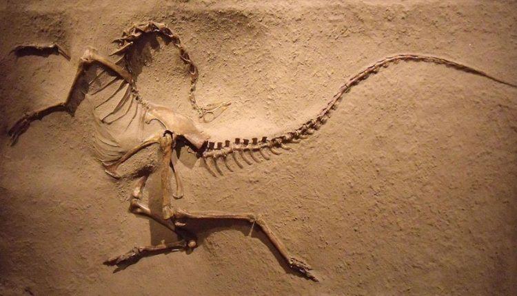 دیجی فکت: ۱۵ دانستنی دربارهی انقراض
