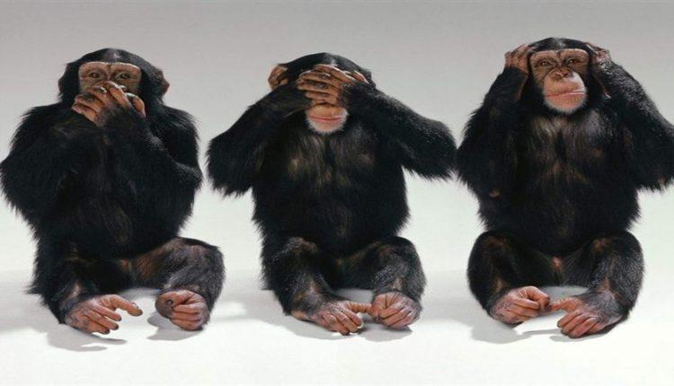 دیجی فکت: ۱۹ دانستنی دربارهی میمونها