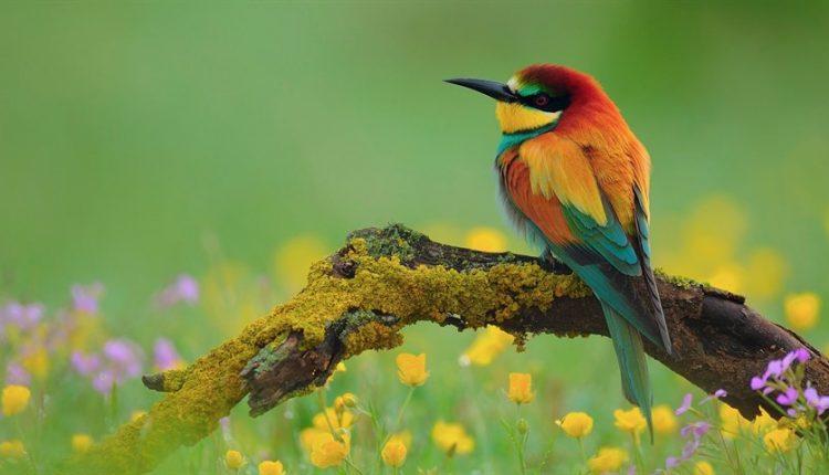 دیجی فکت:37 دانستنی دربارهی پرندگان