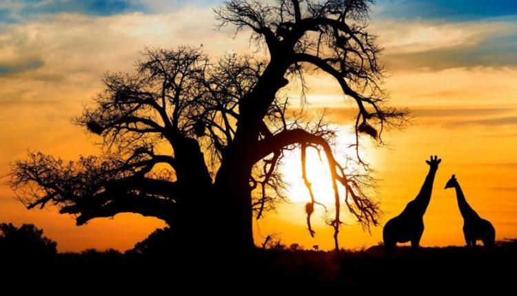 دیجی فکت: ۳۶ دانستنی دربارهی قارهی آفریقا