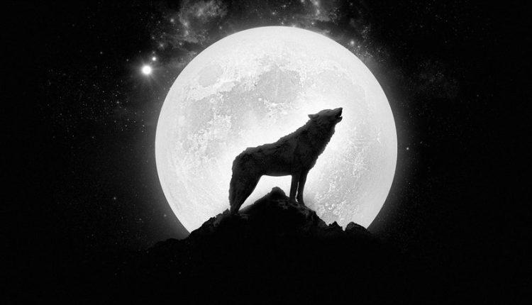 دیجی فکت: ۲۷ دانستنی درمورد گرگها
