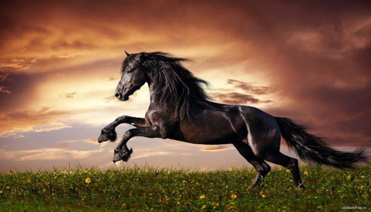 دیجی فکت: ۲۸ دانستنی دربارهی اسبها