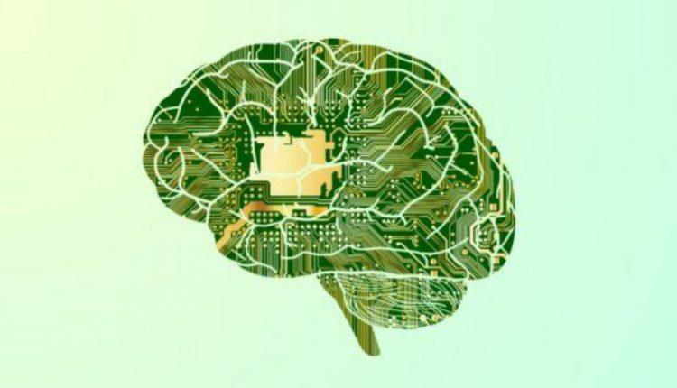 آیا مغز انسان مثل یک کامپیوتر کوانتومی کارمیکند؟