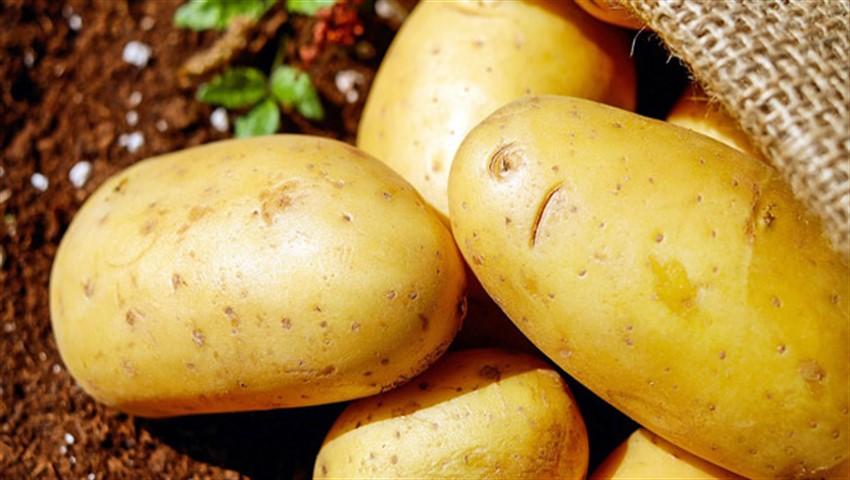 دیجی فکت: ۱۳ دانستنی دربارهی سیبزمینی