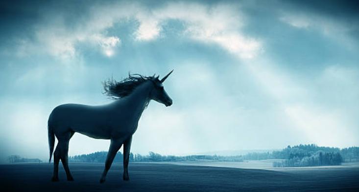 اسب تک شاخ