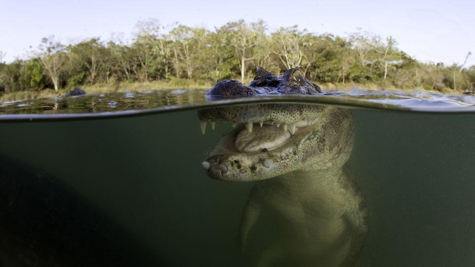 تمساح: 1 نفر در سال