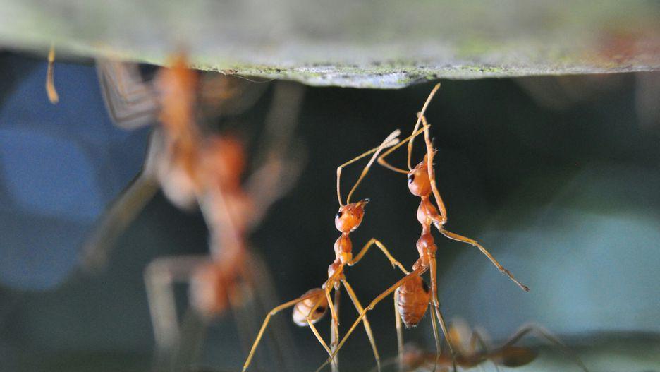 مورچهها: 30 نفر در سال