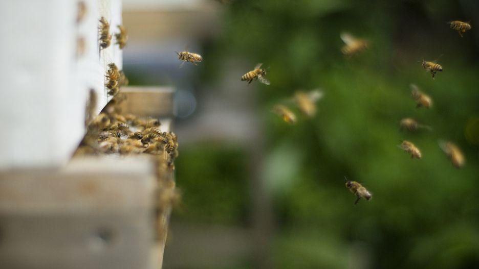 زنبور: 53 نفر در هر سال