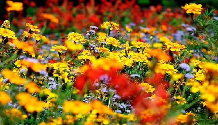 گیاهان از کجا میفهمند کی گل بدهند؟