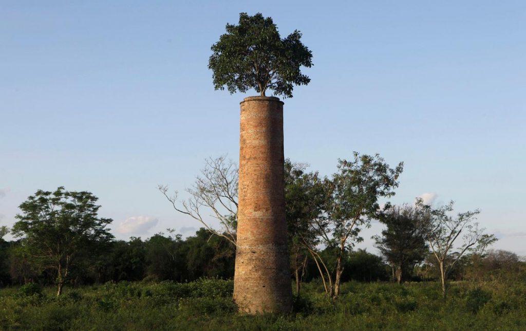 درختی که از دودکش یک کارخانه رها شده در پاراگوئه سر به بیرون آورده است!