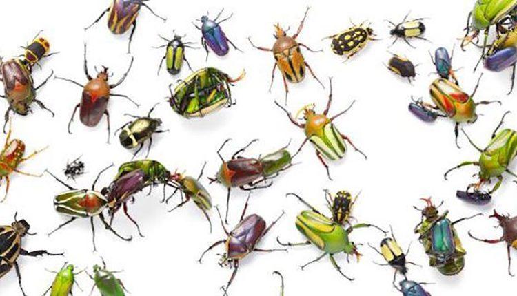 حشرات می خوابند