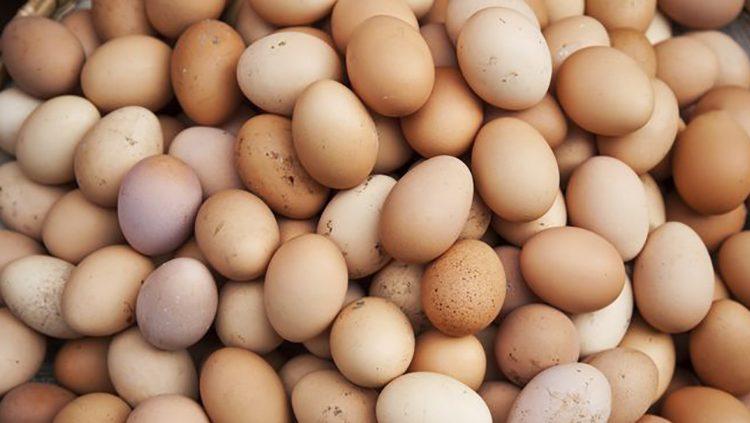 182717335-اگر تخم مرغ در یک لیوان آب شناور شود، فاسد است