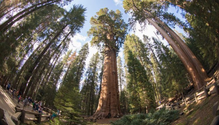 پیرترین درختان جهان چند سال عمر کردهاند؟