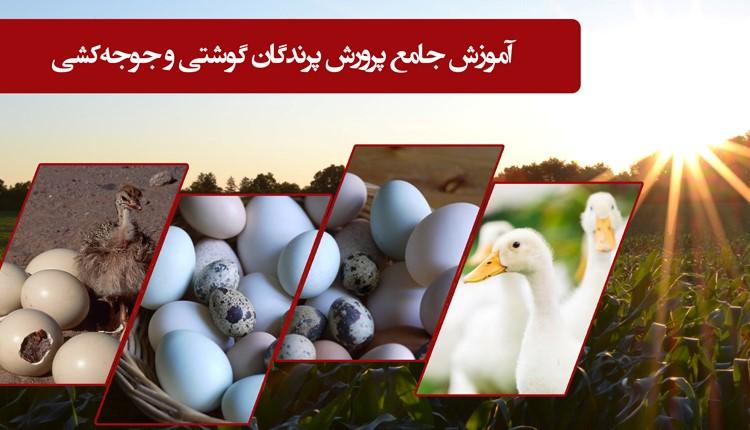 پرورش پرندگان