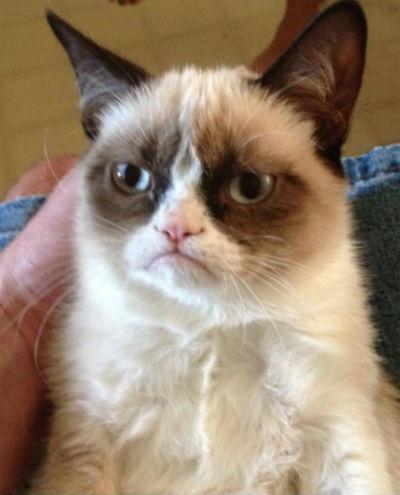 گربهای که در یوتیوب درآمدی بیش از برنده اسکار داشت