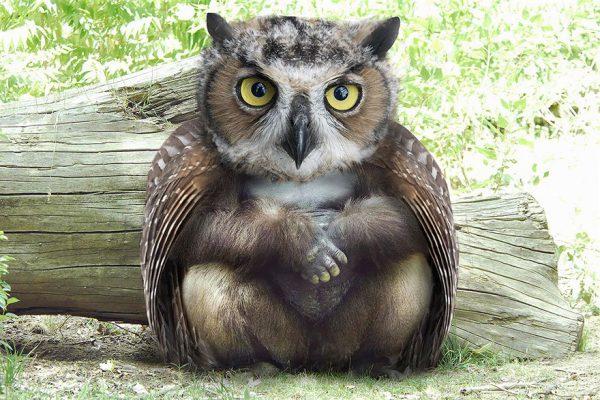 تصاویر فتوشاپ از حیوانات: اویلا