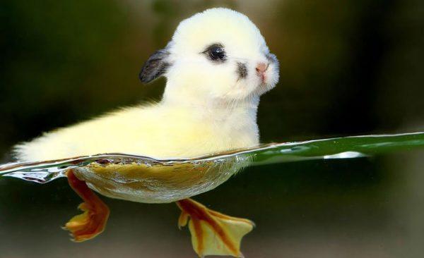 تصاویر فتوشاپ از حیوانات: باکی