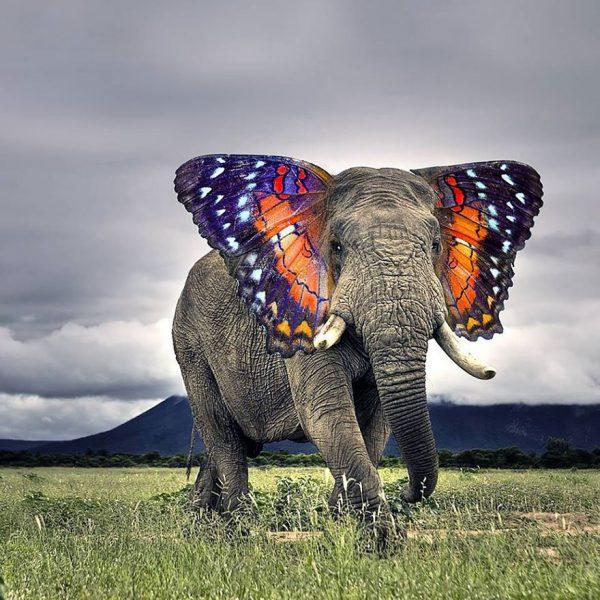 تصاویر فتوشاپ از حیوانات: باترفنت