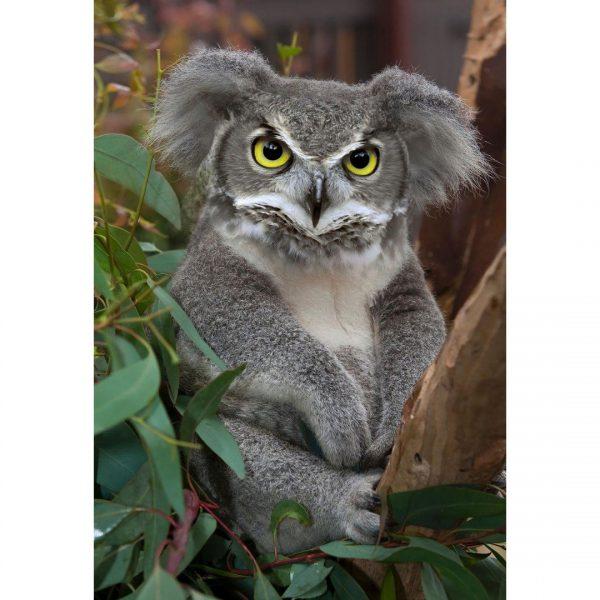تصاویر فتوشاپ از حیوانات: کوولا