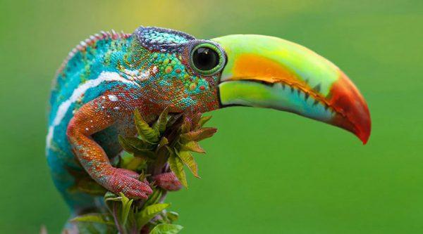 تصاویر فتوشاپ از حیوانات