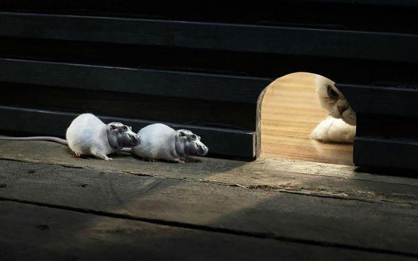 تصاویر فتوشاپ از حیوانات: هیپورات