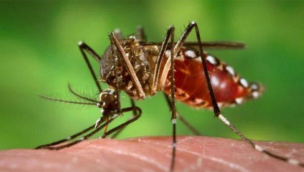 ویروس تب دنگ