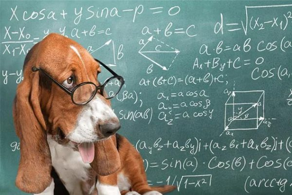حقایقی جالب درباره ذهن سگ