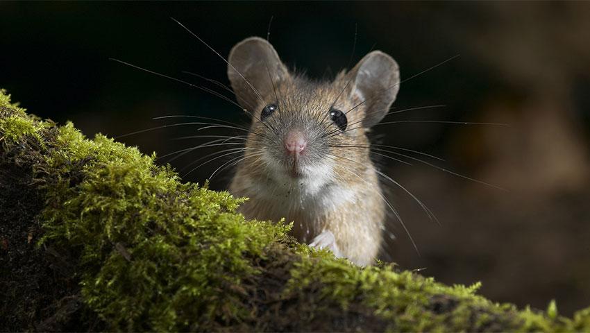12 حقیقت جالب درباره موشها