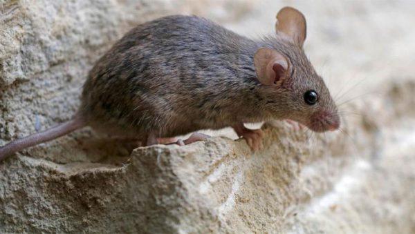 کوهنوردی حرفهای موشها