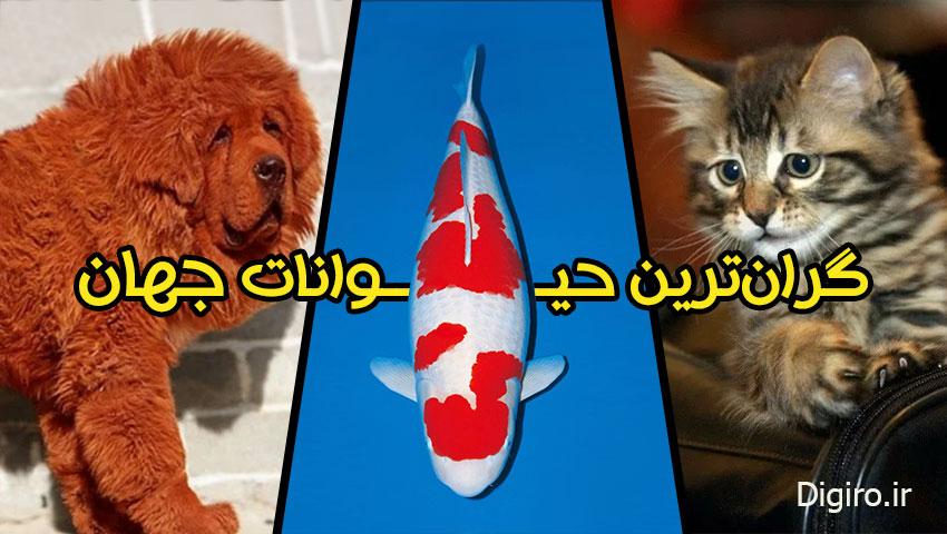 گرانترین حیوانات جهان