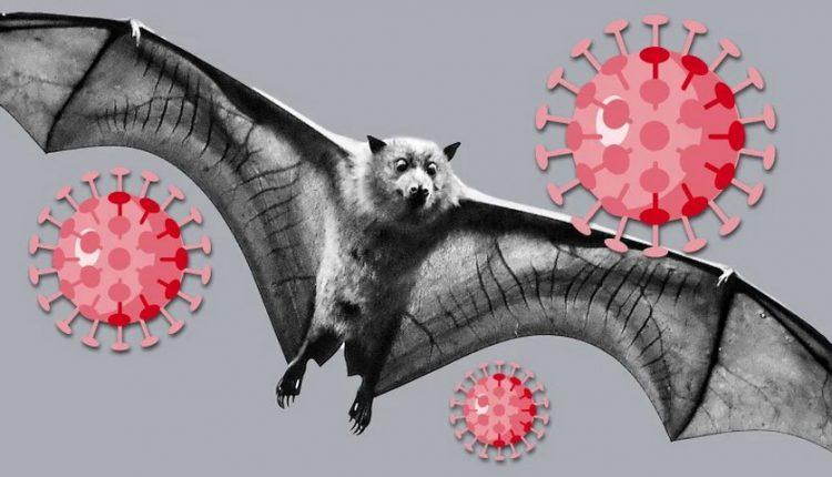 چرا خفاشها به عنوان عامل ویروس کرونا شناحته میشوند؟