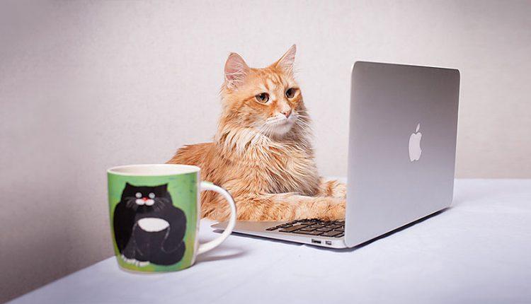 با 10 عنوان شغلی مهم گربه ها در طول تاریخ آشنا شوید