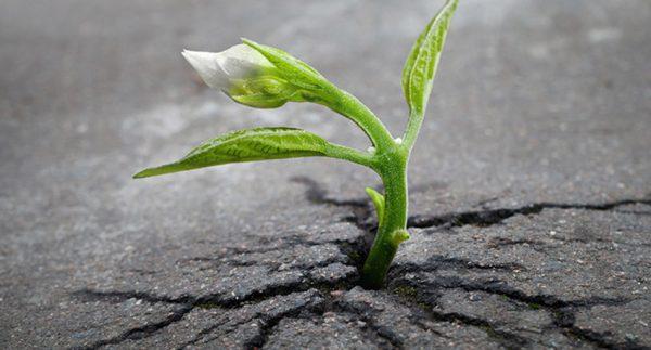 مفهوم رشد پس از سانحه