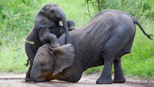 بزرگترین حیوانات جهان 8