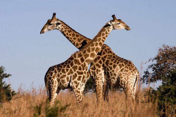 بزرگترین حیوانات جهان 7
