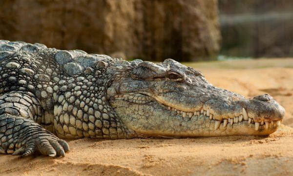 بزرگترین حیوانات جهان 4