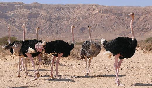 بزرگترین حیوانات جهان 3