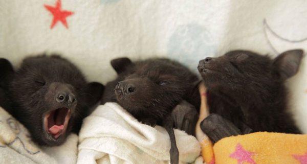خفاش 3